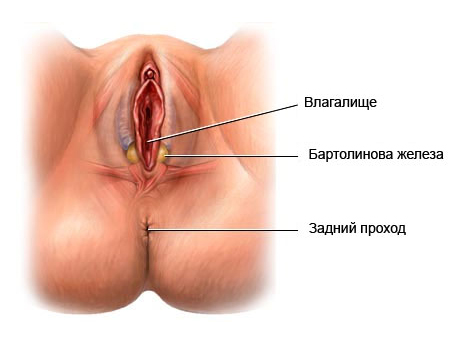 Схема ладушек