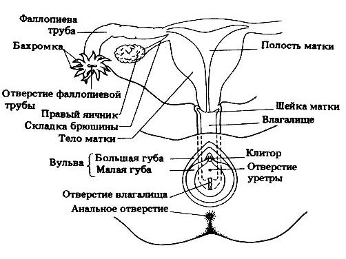 Схема сиповки