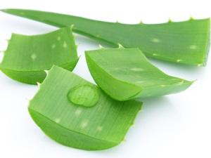 Польза алоэ для лечения серозометры