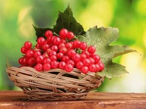 Польза ягод калины в урологии