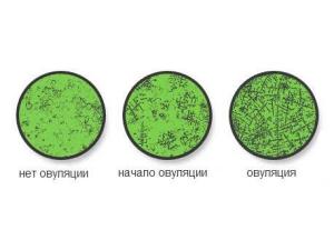 Определение овуляции по слюне