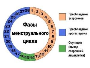 """Расчет овуляции для вычисления """"опасных"""" дней"""