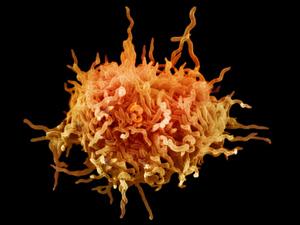 Болезнетворные микроорганизмы