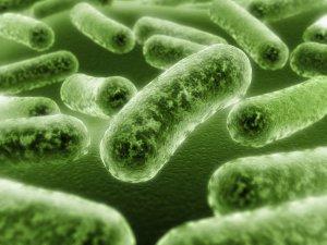 Инфекционные заболевания как причина боли в уретре