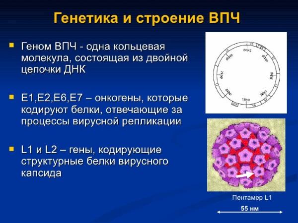 ВПЧ - причина развития рака шейки матки