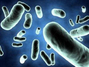Воспаление яичников при попадании инфекции