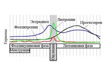 Повышение лютотропина в период овуляции